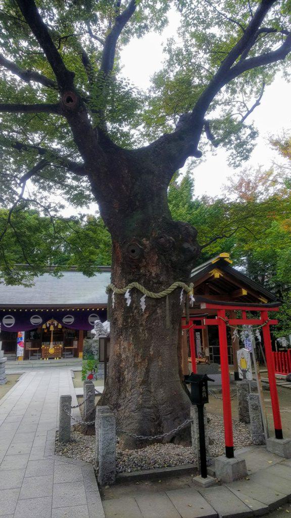 新田神社の御神木